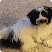 Adopt A Pet :: Ollie - Oviedo, FL