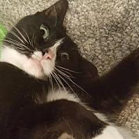 Adopt A Pet :: Jasmine - Elizabethtown, PA