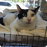 Adopt A Pet :: Flash - Walnut Creek, CA