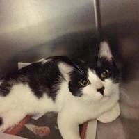 Adopt A Pet :: Lurch - Buffalo, NY