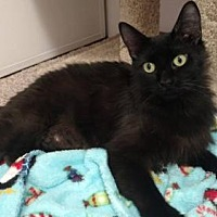 Adopt A Pet :: Susie Syrup - Campbell, CA