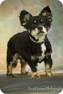 Corgi Mix Dog for adoption in Anchorage, Alaska - Buddy