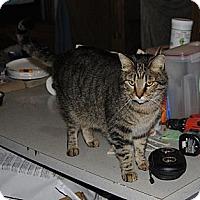 Adopt A Pet :: Jag - Sanford, ME