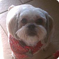 Adopt A Pet :: Emo - Hales Corners, WI