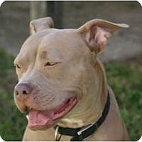 Adopt A Pet :: Star - DFW, TX