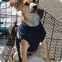 Adopt A Pet :: Yuuta - Centennial, CO