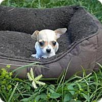 Adopt A Pet :: Kammy - Fort Lauderdale, FL