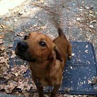 Adopt A Pet :: Montgomery - Decatur, GA