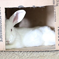 Adopt A Pet :: Buster - Livermore, CA