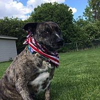 Adopt A Pet :: Eva - Flint, MI