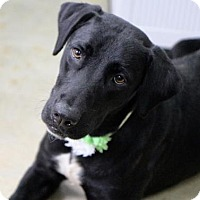 Adopt A Pet :: Seven - Picayune, MS