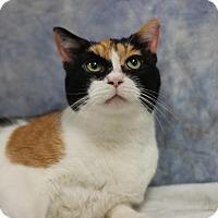 Adopt A Pet :: Cindy - NO FEE - Midland, MI