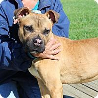 Adopt A Pet :: Quinn - Elyria, OH