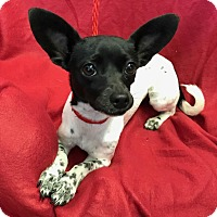 Adopt A Pet :: Gabriella - Redding, CA