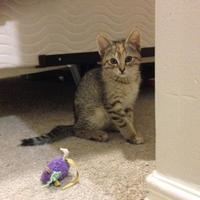 Adopt A Pet :: Jackie - Athabasca, AB