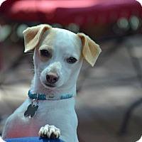 Adopt A Pet :: Dexter - Fairfield, OH