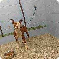 Adopt A Pet :: A506518 - San Bernardino, CA