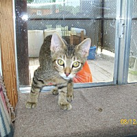 Adopt A Pet :: Katie - Mexia, TX