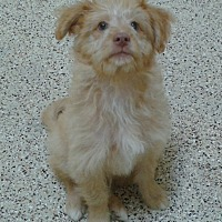 Adopt A Pet :: Conan - Thousand Oaks, CA