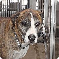 Adopt A Pet :: Chevy - Corona, CA