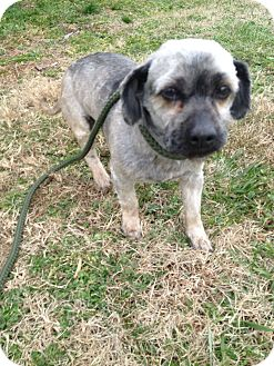 Terrier (Unknown Type, Small) Mix Dog for adoption in Henderson, North Carolina - LeRoy