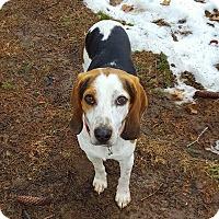 Adopt A Pet :: Orvin - Shelter Island, NY