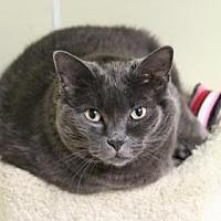 Adopt A Pet :: Lilac - E. Brookfield, MA