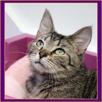 Adopt A Pet :: Fireball - Batavia, OH