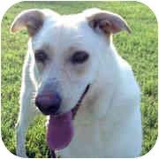 German Shepherd Dog/Labrador Retriever Mix Dog for adoption in Milledgeville, Georgia - Ellabelle