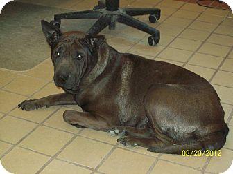 Shar Pei Mix Dog for adoption in White Cloud, Michigan - Matilda