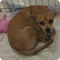 Adopt A Pet :: Marsha Brady - Phoenix, AZ