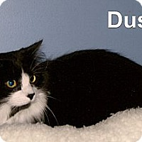 Adopt A Pet :: Dusty - Medway, MA