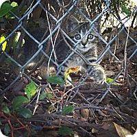 Adopt A Pet :: Ama - Sunrise, FL