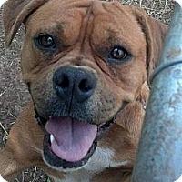 Adopt A Pet :: Rudy - Moulton, AL