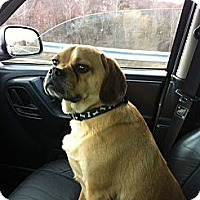 Adopt A Pet :: King - Middlesex, NJ