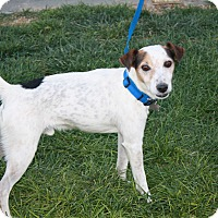 Adopt A Pet :: Sargeant - California City, CA