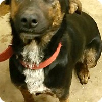 Adopt A Pet :: Cocoa needs foster today - Sacramento, CA