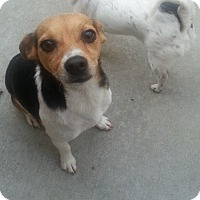 Adopt A Pet :: Turbo*ADOPTED!* - Chicago, IL