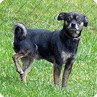 Adopt A Pet :: Chong--RESCUED! - Marlinton, WV