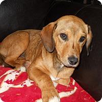 Adopt A Pet :: Janelle - dewey, AZ