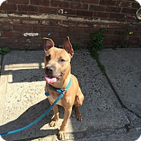 Adopt A Pet :: WIllow - Park Ridge, NJ