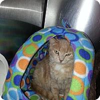 Adopt A Pet :: Maxwell - Chesapeake, VA