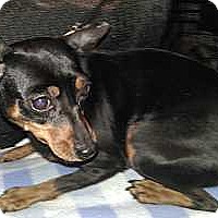 Adopt A Pet :: Mistletoe - Syracuse, NY