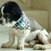 Adopt A Pet :: Irving - Culver City, CA