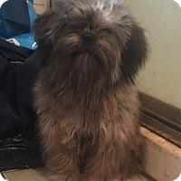 Adopt A Pet :: Miss Moppet - Van Nuys, CA