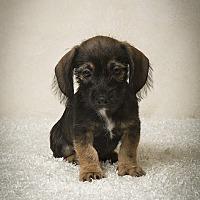 Adopt A Pet :: Crawford - Davie, FL