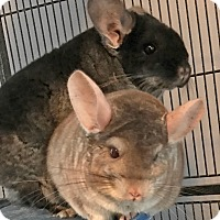 Adopt A Pet :: Beau & Jax - Granby, CT