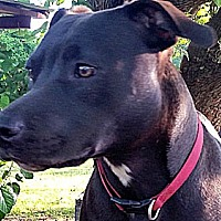 Labrador Retriever Mix Dog for adoption in Point Pleasant, Pennsylvania - Happy