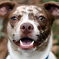 Adopt A Pet :: Dollar - Sarasota, FL