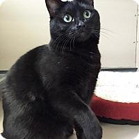 Adopt A Pet :: Jura - Oakland, CA